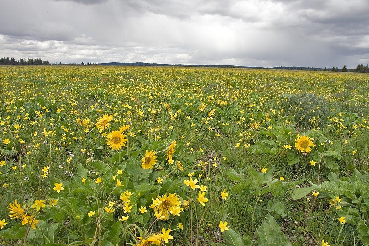 Cascadia Prairie Oak P...