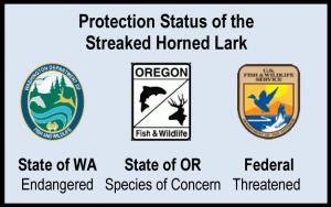 Streaked Horned Lark Status 2013