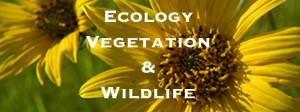 Eriophyllum lanatum banner title