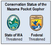 Mazama Pocket Gopher Status 2013