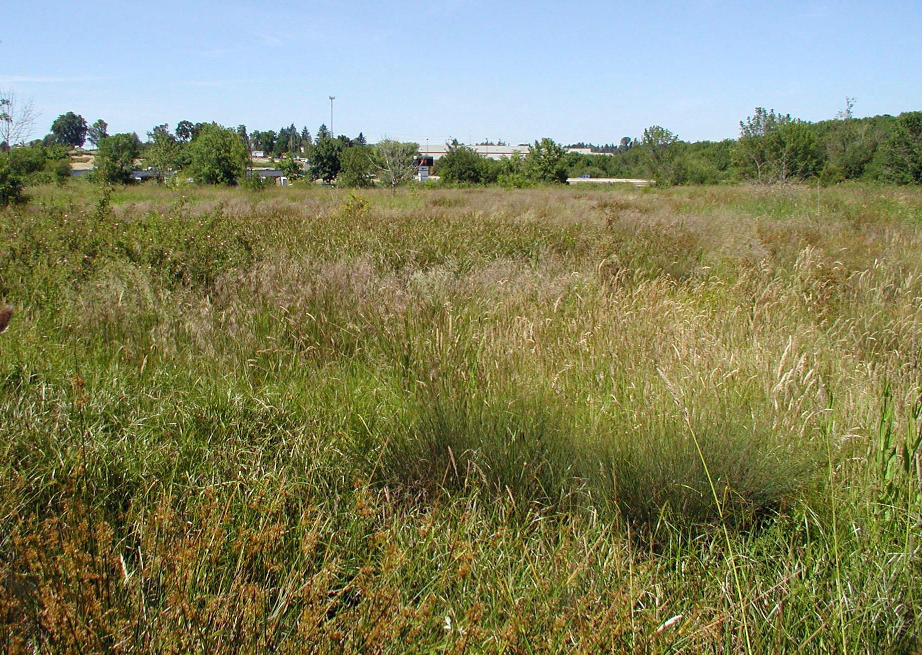 Knez Wetland