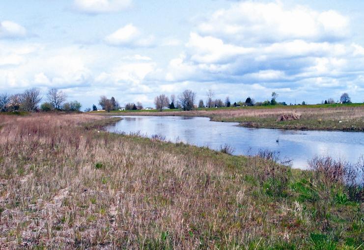 Meadowlark Prairie Eugene,jpg